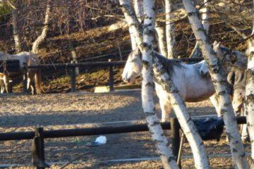 chalets du goulet chevaux