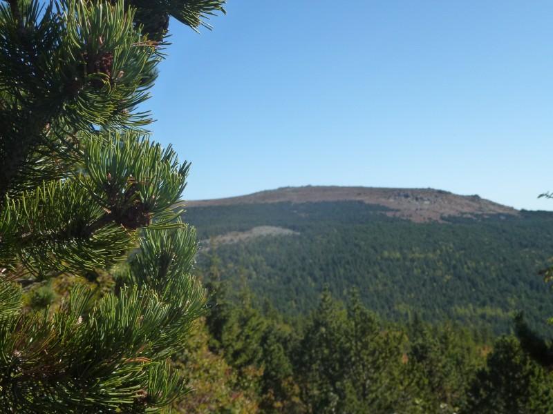 arbres colline